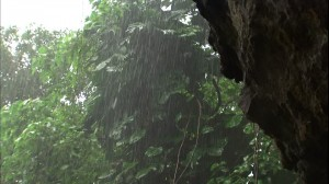 954227325-kauai-wet-tropical-rainforest-vegetation